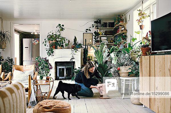 Frau in voller Länge beim Mops kauernd  während sie eine Topfpflanze auf einem Teller im heimischen Zimmer positioniert