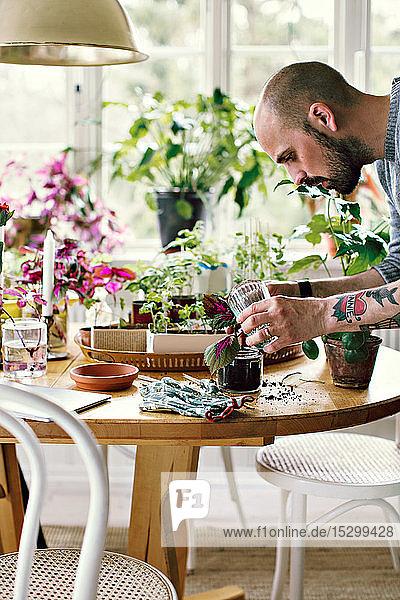 Seitenansicht eines männlichen Umweltschützlers  der einen Setzling in einem Glas am Tisch im Raum pflanzt