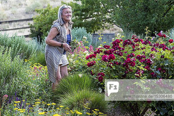 Eine ältere Erwachsene  Großmutter und ihr 5 Jahre alter Enkel beim Rosenschneiden in ihrem Garten