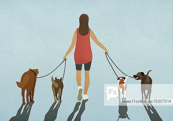 Frau geht mit vier angeleinten Hunden spazieren