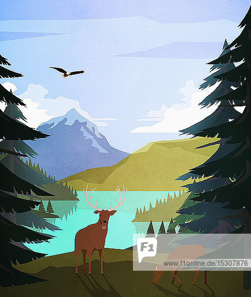 Bald eagle and deer at idyllic  remote lakeside