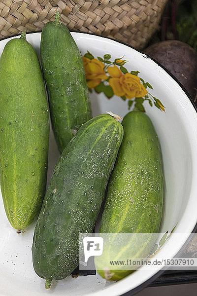 Nahaufnahme von grünen Bio-Gurken in einer Vintage-Schale