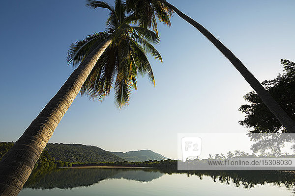 Palm trees leaning over tranquil  placid tropical river  Platinitos  Nayarit  Mexico