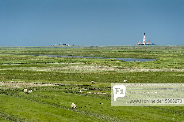 Deutschland  Schleswig-Holstein  Schafe auf Salzwiese mit Westerheversand-Leuchtturm im Hintergrund