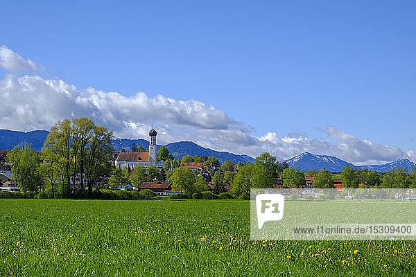 Gras und Bäume vor der Stadt im Alpenvorland  Königsdorf  Bayern  Deutschland