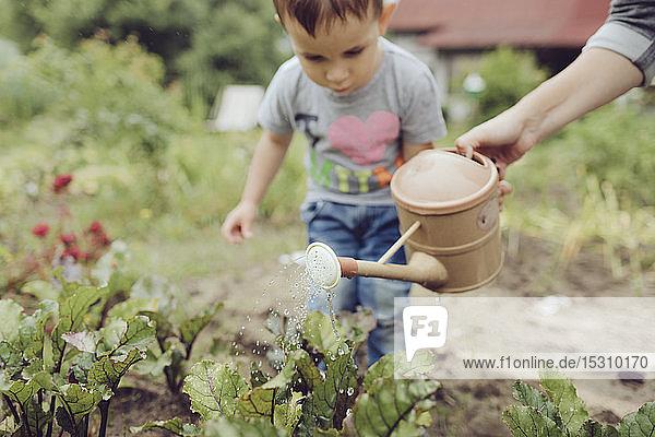 Mutter mit Kleinkind bewässert Gemüse im Garten