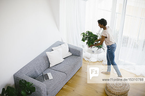 Woman arranging plant at home with laptop on couch