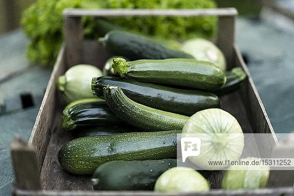 Zucchini in Holzkiste