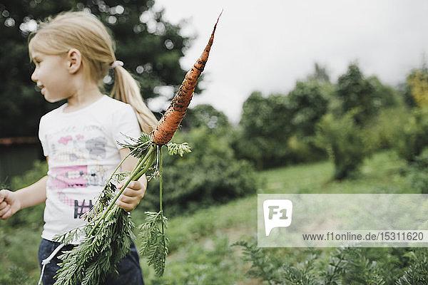 Kleines Mädchen hält Karotte im Garten