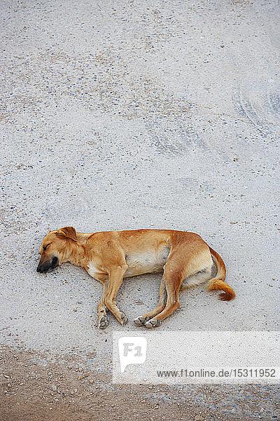 Schlafender Hund auf dem Boden  Sur  Oman