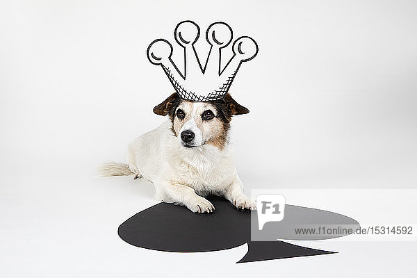 Portrait of mongrel as King of Spades with drawn crown