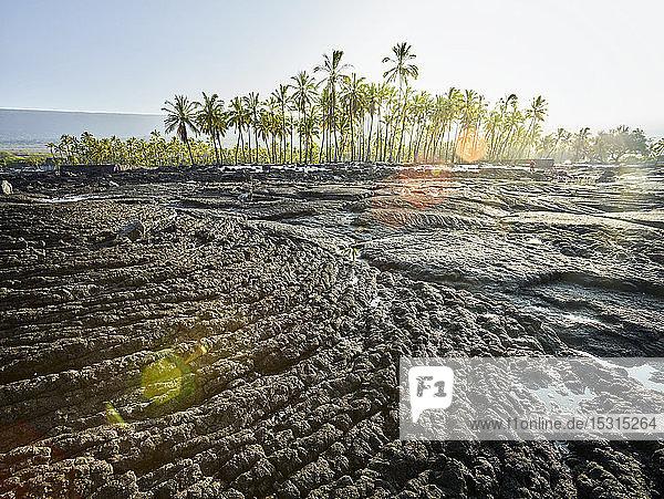Volcanic rocks and trees at Puuhonua O Honaunau National Historical Park against sky