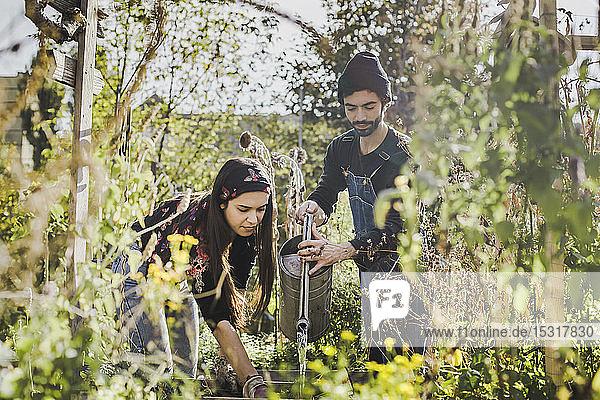 Paar Bewässerungspflanzen im Stadtgarten