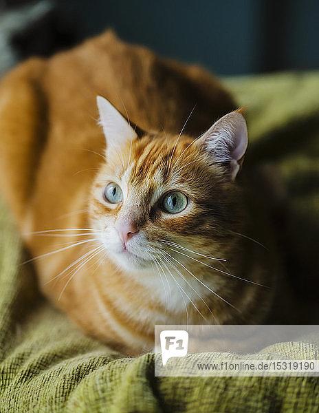 Porträt einer rothaarigen Katze