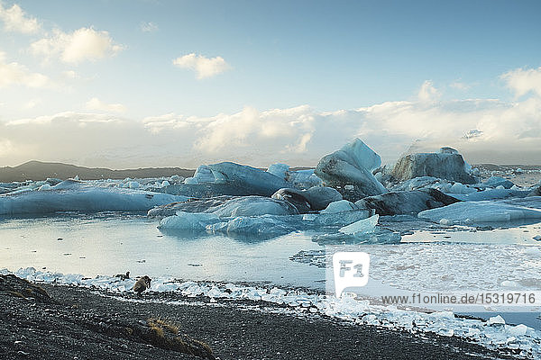 Iceland  South Iceland Jokulsarlon glacial lake