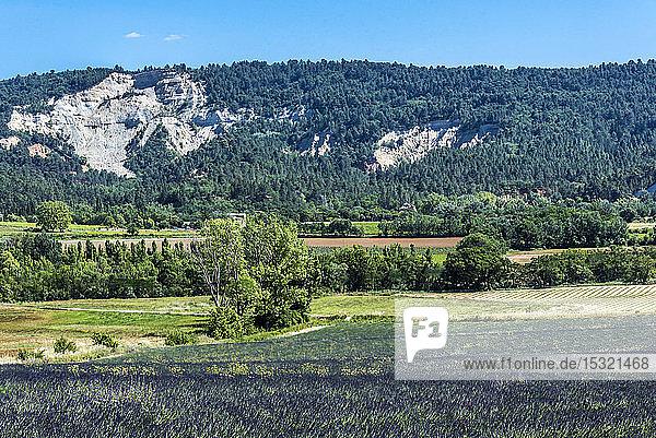 France  Vaucluse  landscape of Saint-Saturnin-les-Apt with a lavender field