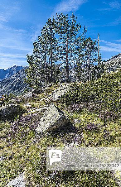 France  Hautes-Pyrenees  Haute Vallee d'Aure  Neouvielle National Nature Reserve  La Hourquette d'Aubert pathway