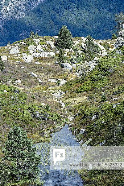 France  Pyrenees Ariegeoises Regional Nature Park  Bassies lakes