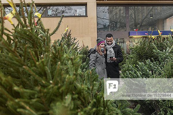 Couple Christmas tree shopping Couple Christmas tree shopping
