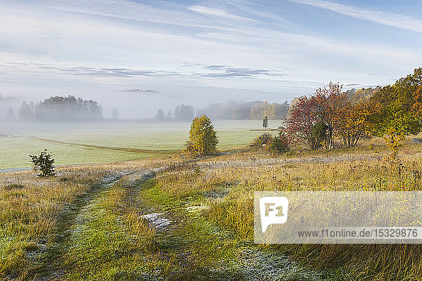 Fog in field during autumn