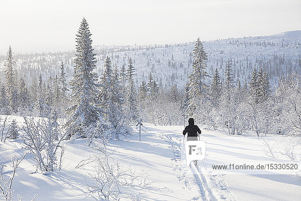 Man skiing by snow covered trees Man skiing by snow covered trees