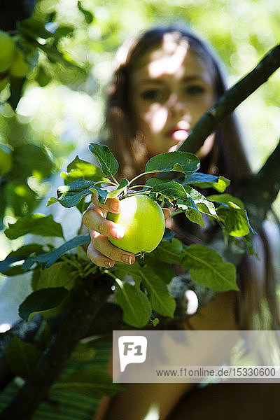 Teenage girl (16-17) holding apple Teenage girl (16-17) holding apple