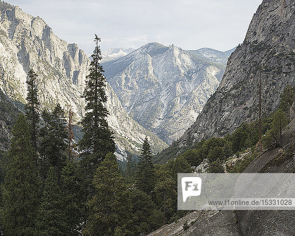 Trees in Kings Canyon National Park in California Trees in Kings Canyon National Park in California