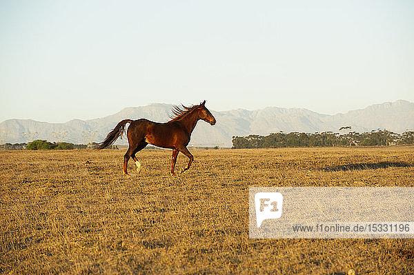 Brown horse in field Brown horse in field