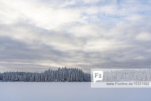 Schnee und Wald bei bedecktem Himmel in Kilsbergen  Schweden