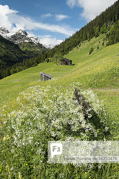 Austria  Tyrol  Allgau Alps  Hornbach valley  a side valley of the Lech watershed  barn; fg.: bench surrounded by Chervil (Chaerophyllum sp.)
