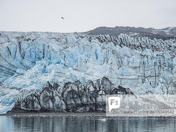Lamplugh Glacier  a tidewater glacier in Glacier Bay National Park and Preserve  Southeast Alaska  United States of America  North America