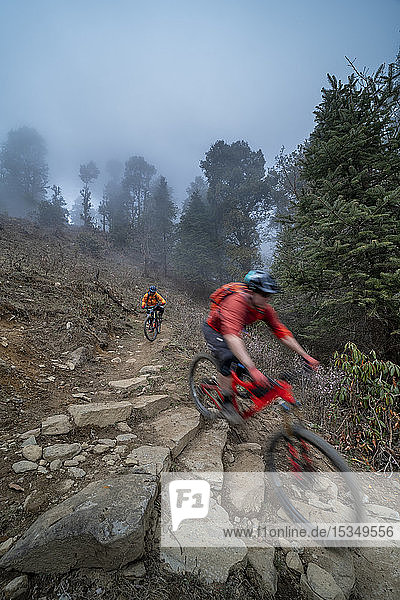 Mountain bikes descend through a misty forest in the Gosainkund region in the Himalayas  Langtang region  Nepal  Asia
