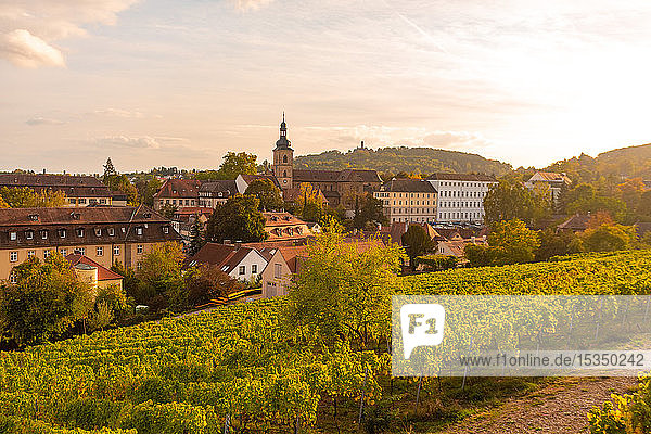 Wine fields by Altenburg  old fortress in Bamberg  UNESCO World Heritage Site  Bavaria  Germany  Europe