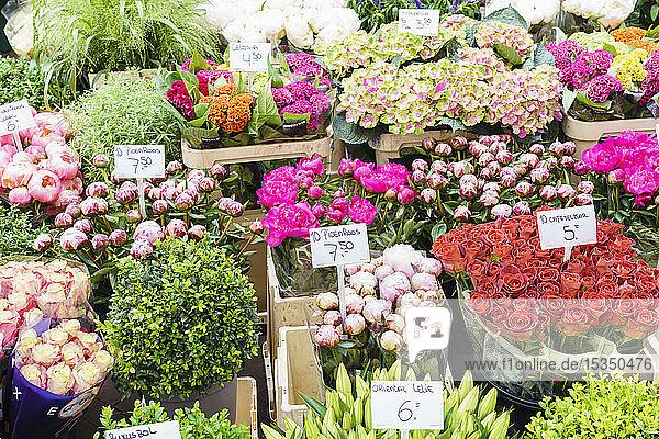 Flowers for sale in the Bloemenmarkt (flower market)  Amsterdam  North Holland  The Netherlands  Europe