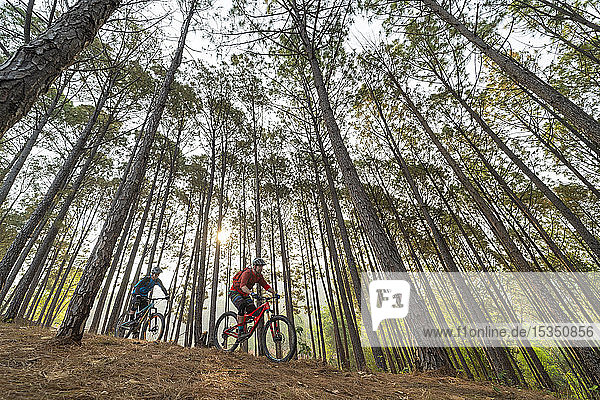 Mountain bikers descend through a forest at sunrise  Nuwacot  Nepal  Asia