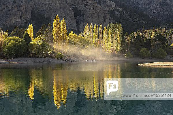 Poplar trees in autumnal colours  San Carlos de Bariloche  Patagonia  Argentina  South America