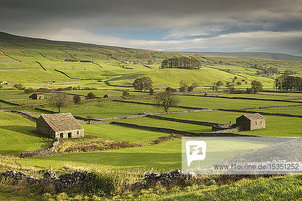 Stone barns and dry stone walls in the rolling countryside of Wensleydale near Hawes  Yorkshire Dales  Yorkshire  England  United Kingdom  Europe