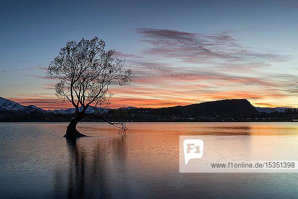 The Wanaka Tree with dramatic sky at sunrise  Lake Wanaka  Otago  South Island  New Zealand  Pacific