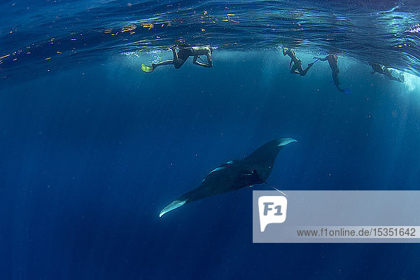 Snorkellers with an oceanic manta ray (Manta birostris) feeding near the surface  Honda Bay  Palawan  The Philippines  Southeast Asia  Asia
