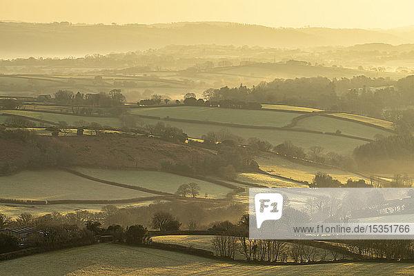Rolling countryside near Moretonhampstead at dawn  Dartmoor National Park  Devon  England  United Kingdom  Europe