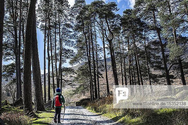 Junge erkundet Nationalpark  Llanaber  Gwynedd  Vereinigtes Königreich