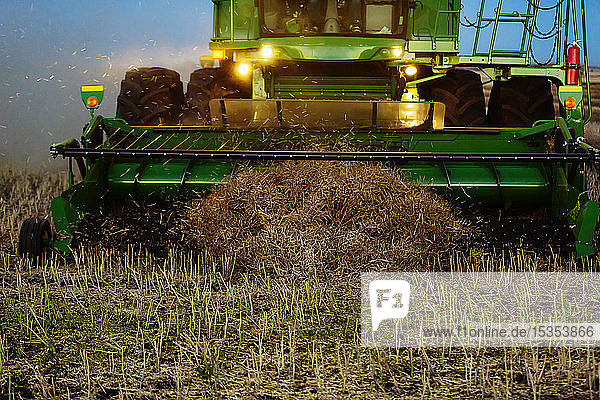 Close-Up of the pickup header of a combine at the end of a swath during the harvesting of canola at sunset; Legal  Alberta  Canada