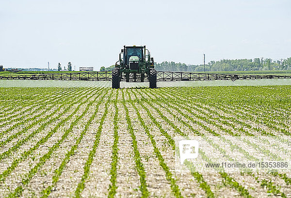 A high clearance sprayer gives a ground chemical application of herbicide to early growth soybeans,  near Niverville; Manitoba,  Canada