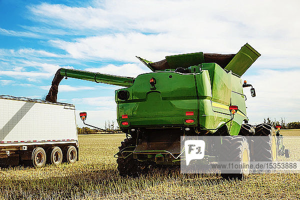 Harvesting canola and transferring the load from the combine to a grain truck using the auger; Legal  Alberta  Canada