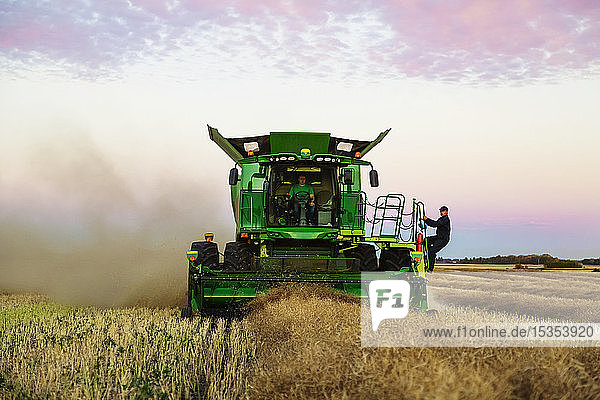 A farmer jumps on a moving combine to join his son while harvesting canola at sunset; Legal  Alberta  Canada