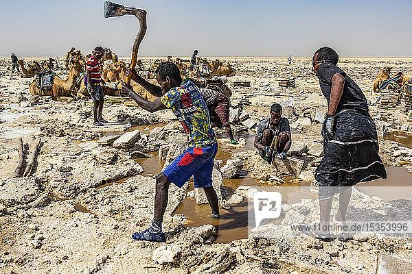 Afar salt miner using a traditional axe to cut and shape salt into blocks in the salt flats of Lake Karum (Lake Assale)  Danakil Depression; Afar Region  Ethiopia