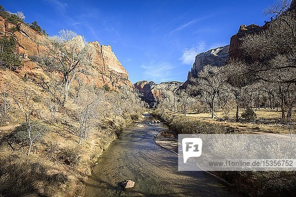Fluss Virgin River fließt durch Zion Canyon  Winter  Zion Nationalpark  Utah  USA  Nordamerika