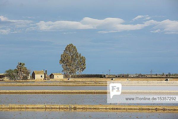 Überschwemmte Reisfelder und Gehöfte  Naturschutzgebiet Ebrodelta  Provinz Tarragona  Katalonien  Spanien  Europa
