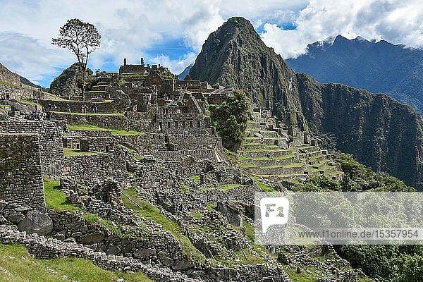 Machu Picchu  Aguas Calientes bei Cusco  Anden  Peru  Südamerika
