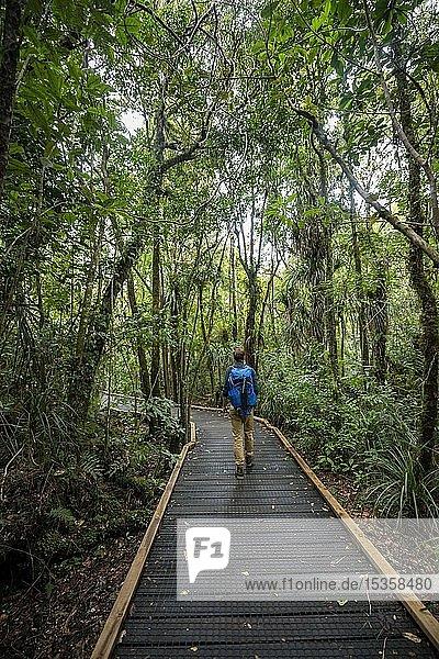 Junger Mann auf Wanderweg im Kauri Wald  Kauri Walks  Waipoua Forest  Northland  Nordinsel  Neuseeland  Ozeanien